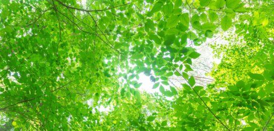 フリー素材ぱくたそ 木漏れ日と日差し