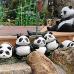 香港オーシャンパークのパンダ館の前にパンダの人形が並ぶ