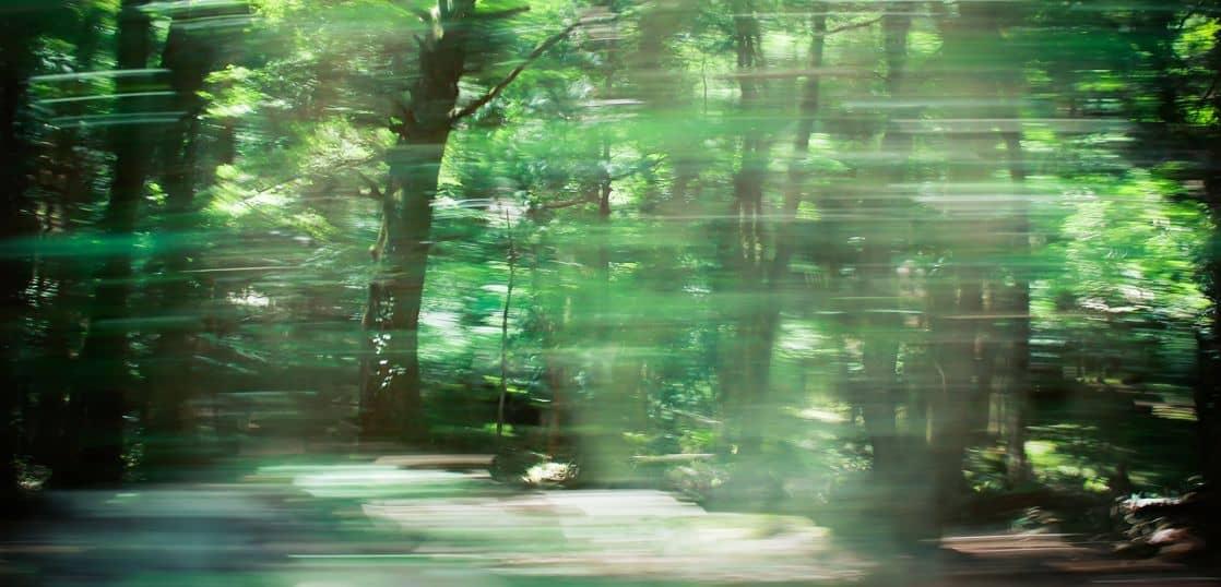走ってブレる林の様子