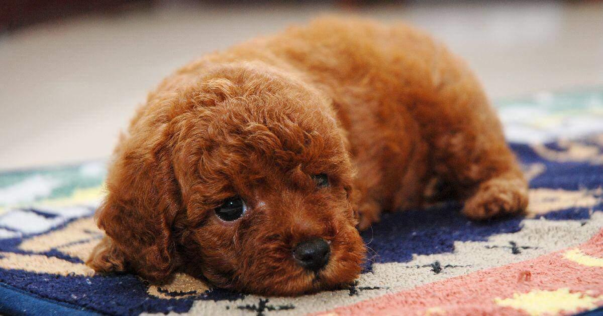 老犬のペット保険加入の落とし穴