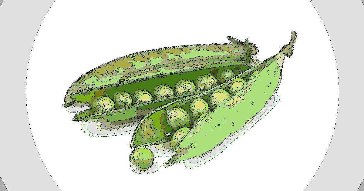 メンデルの法則とエンドウ豆